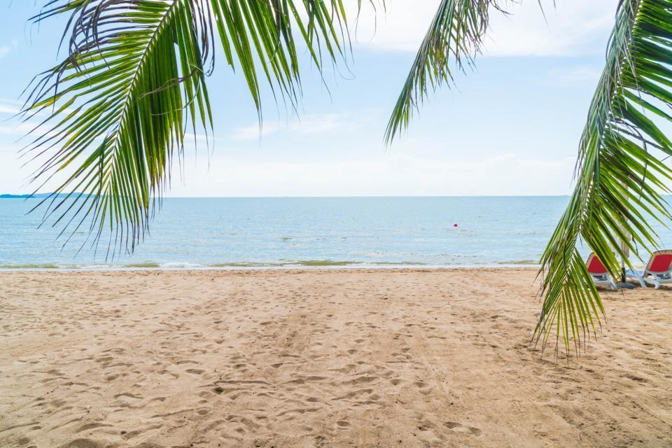 palm-tropical-beach-pattaya-thailand.jpg